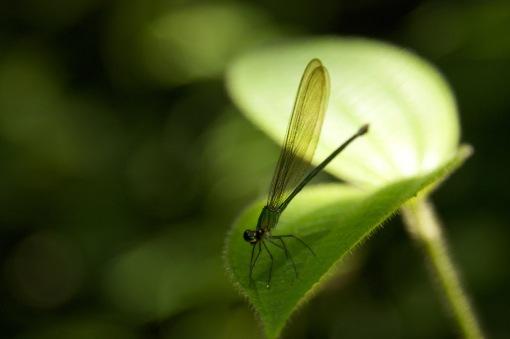 Dragonfly (f4.0 1/160 105mm)